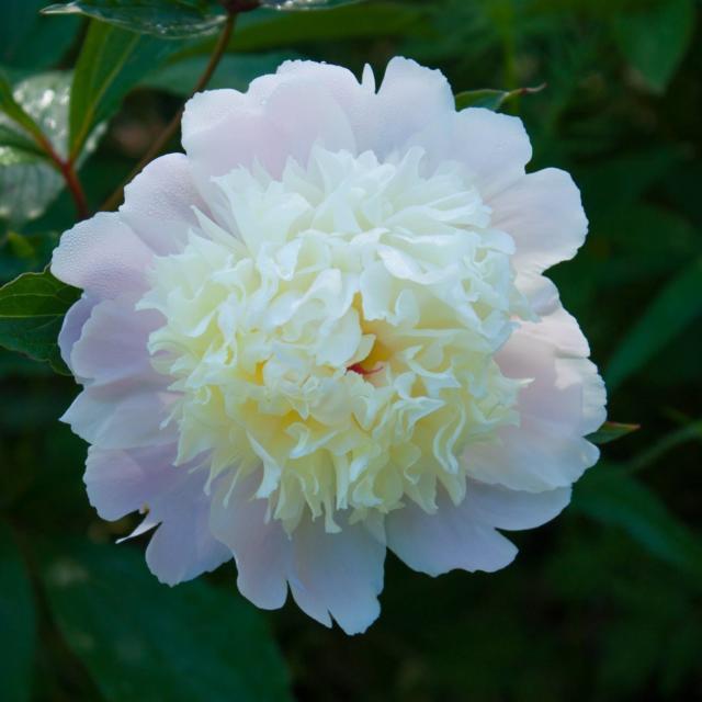 Les Jardins de Cadiot : Roses Anciennes