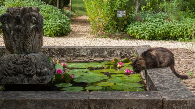 Nymphéas des jardins de Cadiot