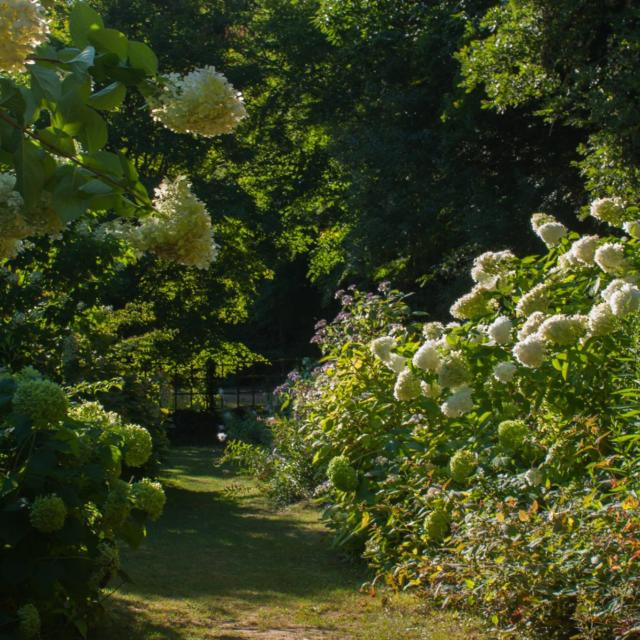 Roseraies Des Jardins De Cadiot