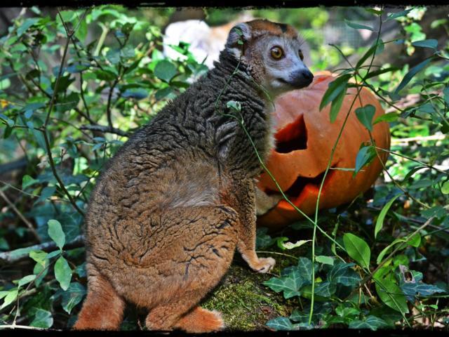 Halloween A La Reserve